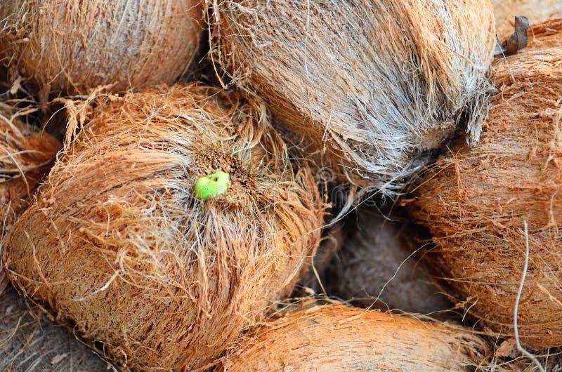 Kokosnötter på en bondemarknad arkivfoton