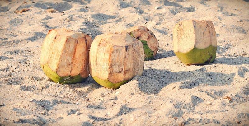 Kokosnötter på stranden royaltyfria foton