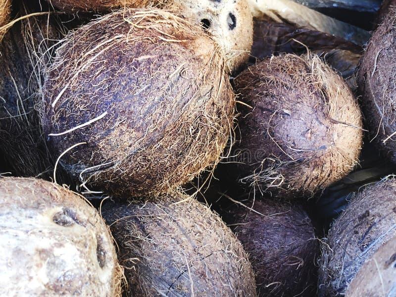 Kokosnötter som är till salu på marknad Grupp av liten hel ny brunt Åkerbruk bakgrund Närbild Top beskådar fotografering för bildbyråer