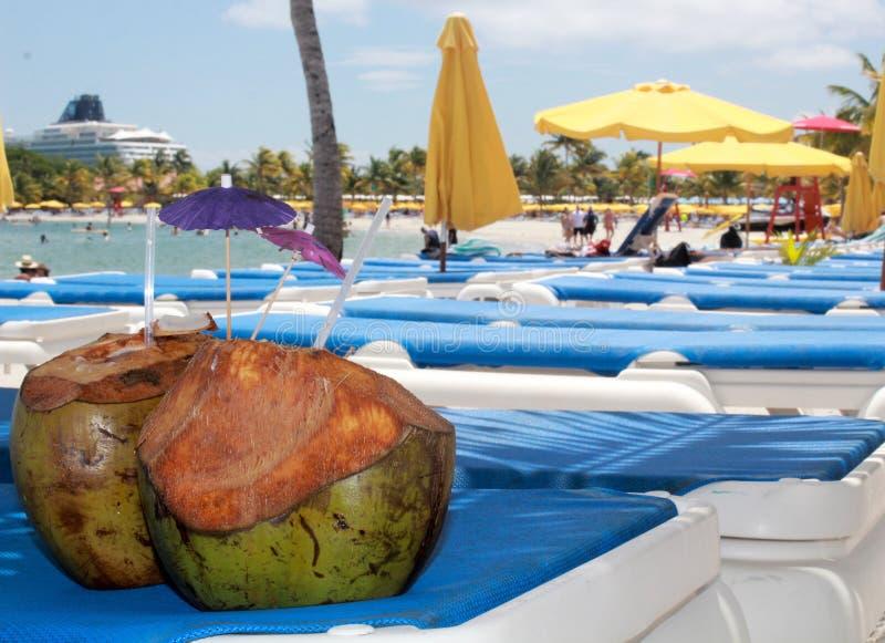 Kokosnötter som strandabstrakt begrepp i skörden Caye, Belize arkivfoto