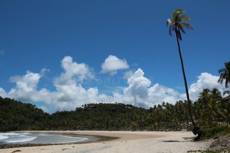 Kokosnöttree på stranden royaltyfria foton
