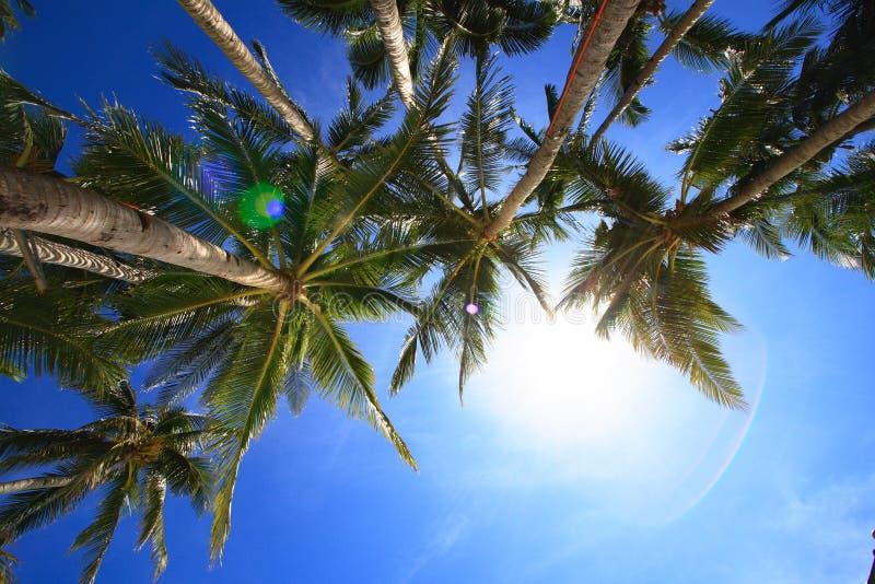 kokosnöttrees royaltyfri foto