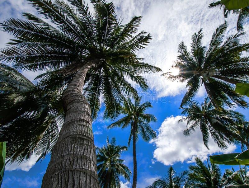 Kokosnöttrees mot den ljusa blåa skyen arkivbilder