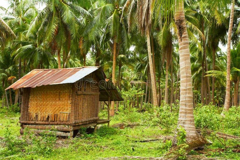 kokosnötvilla arkivfoton