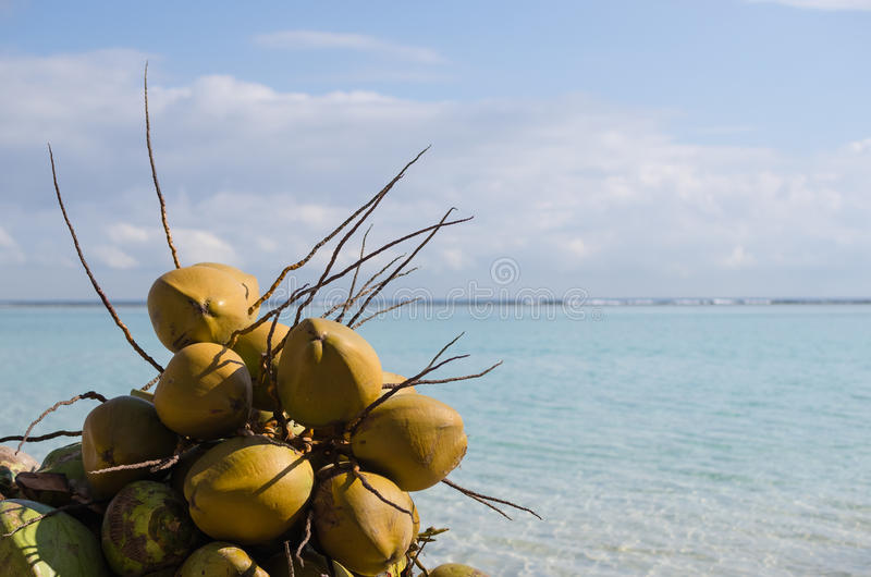 Kokosnüsse, Boca Chica-Strand, Dominikanische Republik, karibisch lizenzfreie stockbilder
