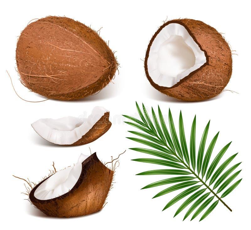 Kokosnüsse mit Blättern. lizenzfreie abbildung