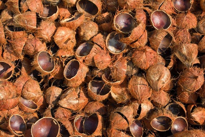 kokosnöthusks arkivfoto