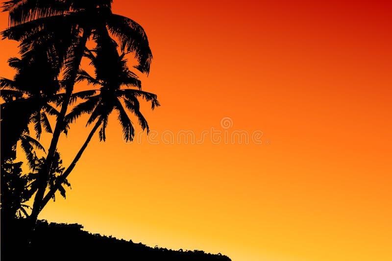 kokosnötsolnedgångtree royaltyfri illustrationer
