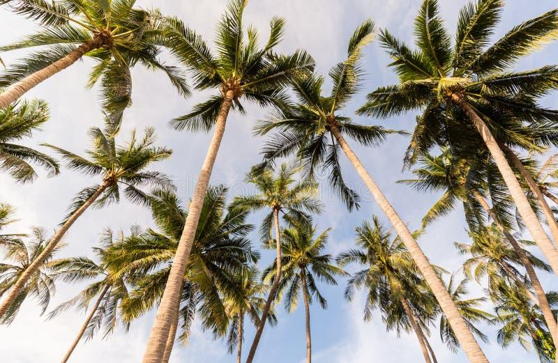 Kokosn?tpalmtr?d p? stranden av Thailand, kokospalm med suddighetshimmel p? stranden f?r sommarbegreppsbakgrund fotografering för bildbyråer