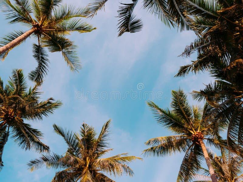 Kokosn?tpalmtr?d p? stranden av Thailand, royaltyfria bilder