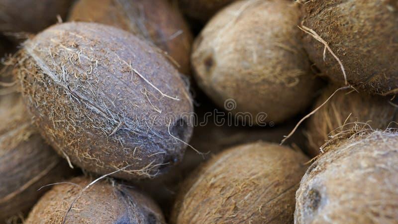 KOKOSN?TTEXTUR i organisk lantgård En massa eller hög av nya smakliga kokosnötter royaltyfria foton
