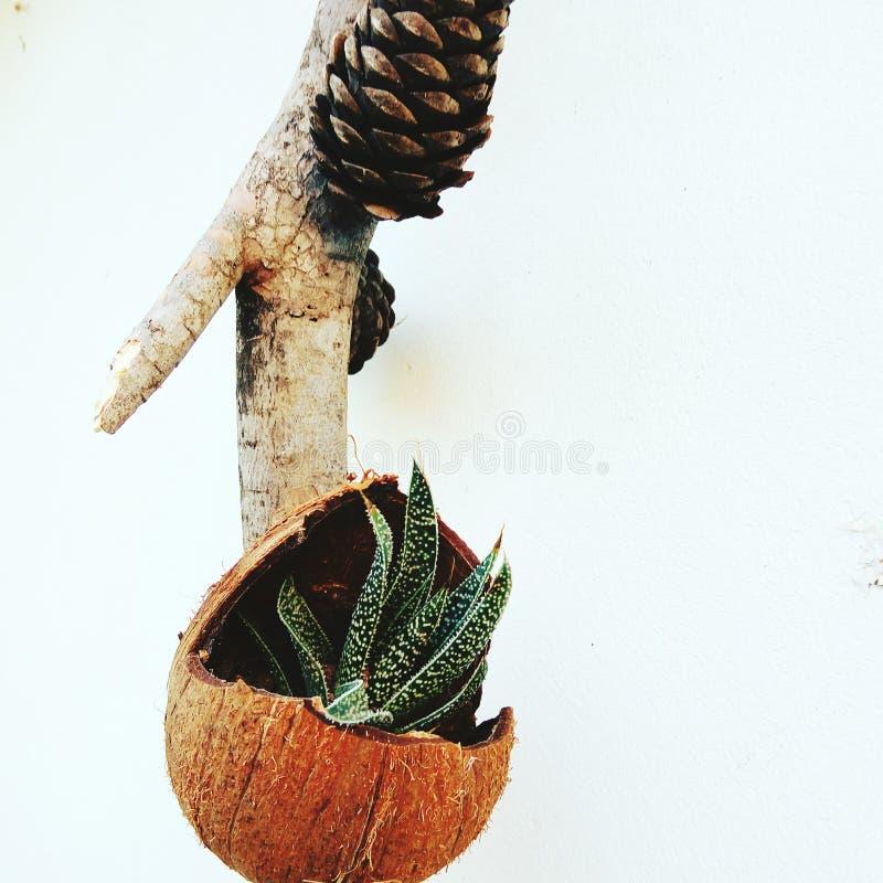 Kokosnoot royalty-vrije stock fotografie