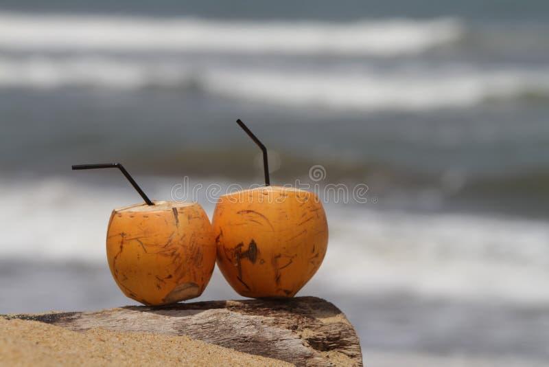 Kokosnoot door het strand royalty-vrije stock afbeelding