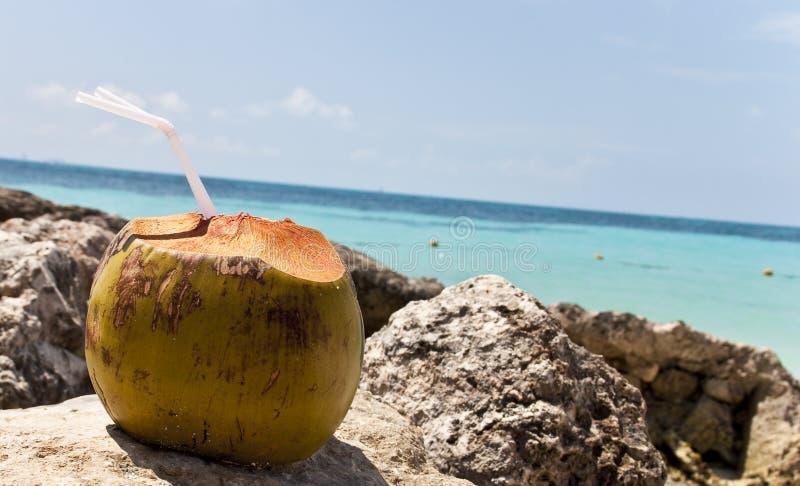 Kokosnoot door het strand royalty-vrije stock fotografie