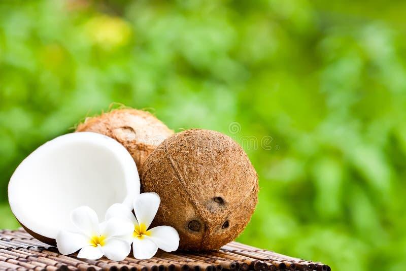 Kokosnoot en kokosnotenolie royalty-vrije stock foto's