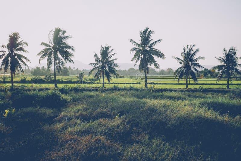 Kokosnoot en palmen De grote bomen groeien in de zomer Tropische palmbladen, bloemenpatroonachtergrond, echte foto stock afbeelding