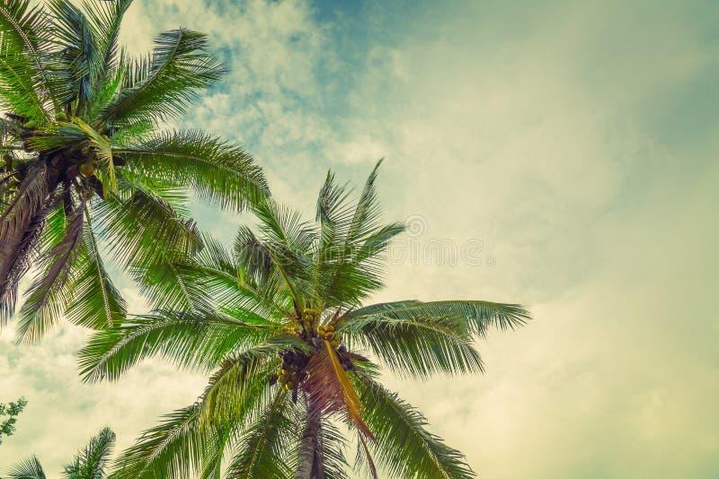Kokosnoot (Gefiltreerd beeld verwerkt uitstekend effect ) stock afbeelding