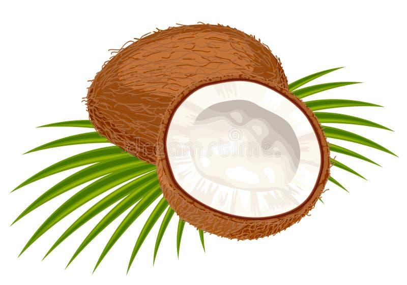 Kokosnoot met bladeren op een witte achtergrond. vector illustratie
