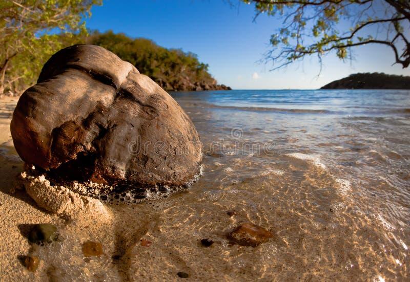 Kokosnoot met Caraïbische achtergrond royalty-vrije stock fotografie