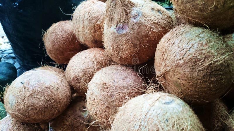 Kokosnoot (niyog) van Quezon-Provincie Filippijnen royalty-vrije stock afbeelding