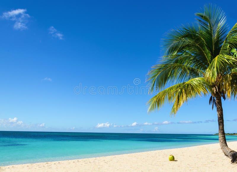 Kokosnoot op een exotisch strand met palm die het overzees op de achtergrond van een zandig strand ingaan stock afbeeldingen