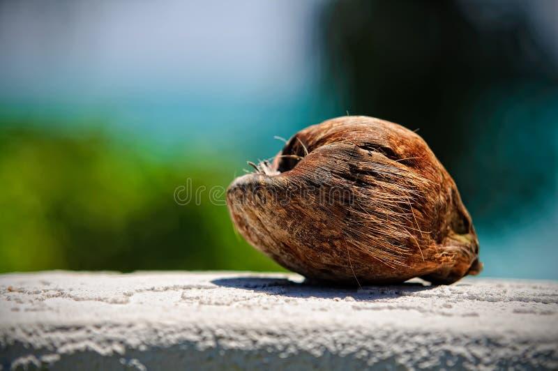 Kokosnoot op een Muur stock foto