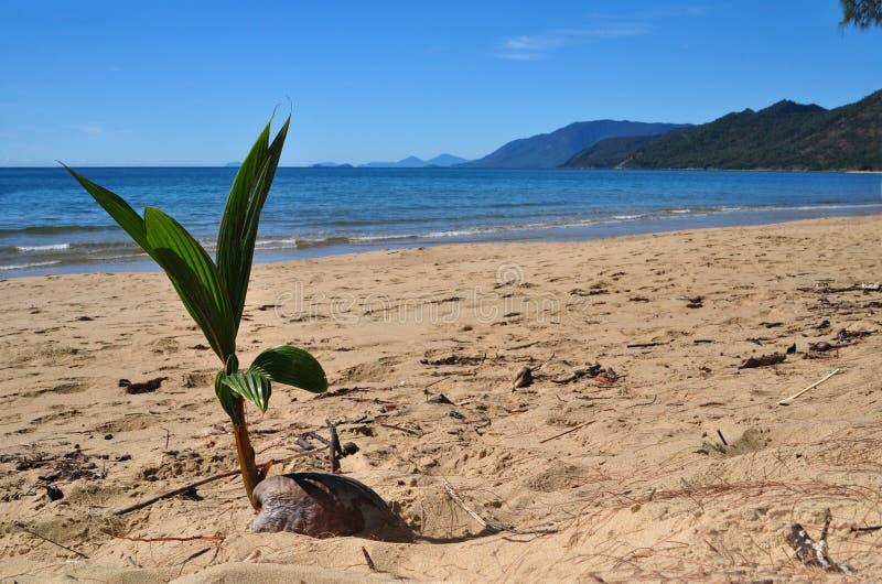Kokosnoot op een strand stock afbeelding