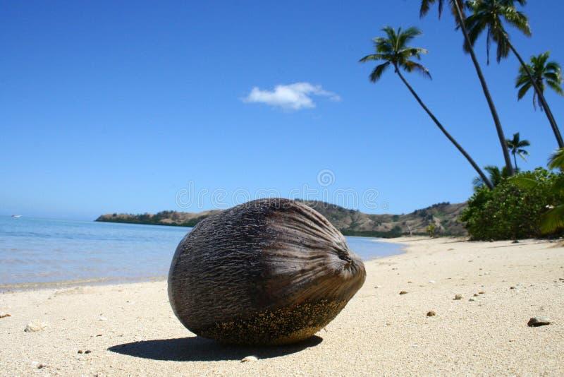 Kokosnoot op een tropisch strand stock foto