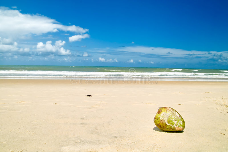 Kokosnoot op het Strand royalty-vrije stock afbeeldingen