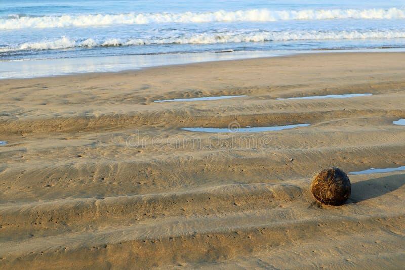 Kokosnoot op het strand gewassen aan wal in Mexico stock foto's