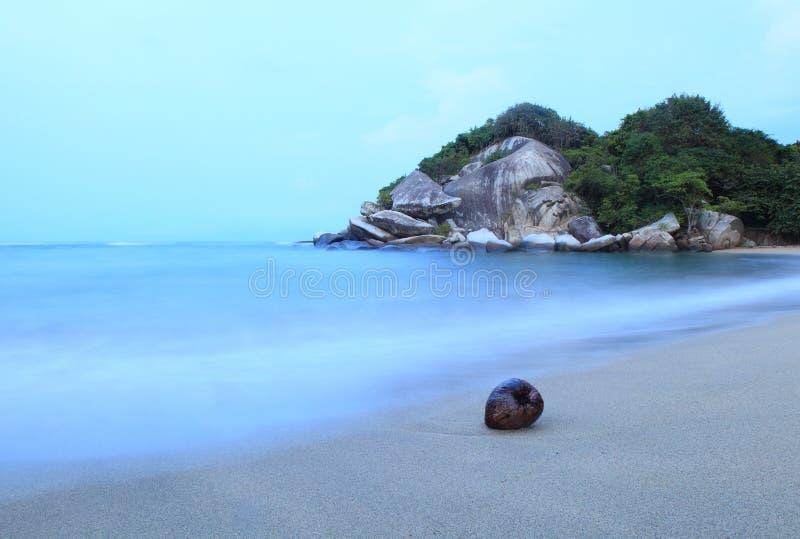 Kokosnoot op het strand van Cabo San Juan royalty-vrije stock foto's