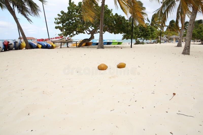 Kokosnoot op het strand op wit die zand onder een palm door de wind wordt gelaten vallen royalty-vrije stock afbeelding