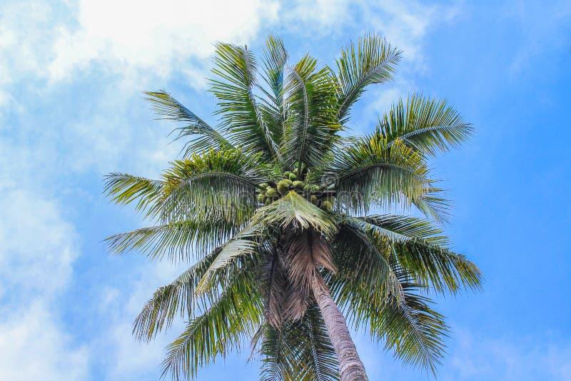 Kokosnoot of palm en levendige blauwe hemel met wolken op achtergrond royalty-vrije stock afbeelding
