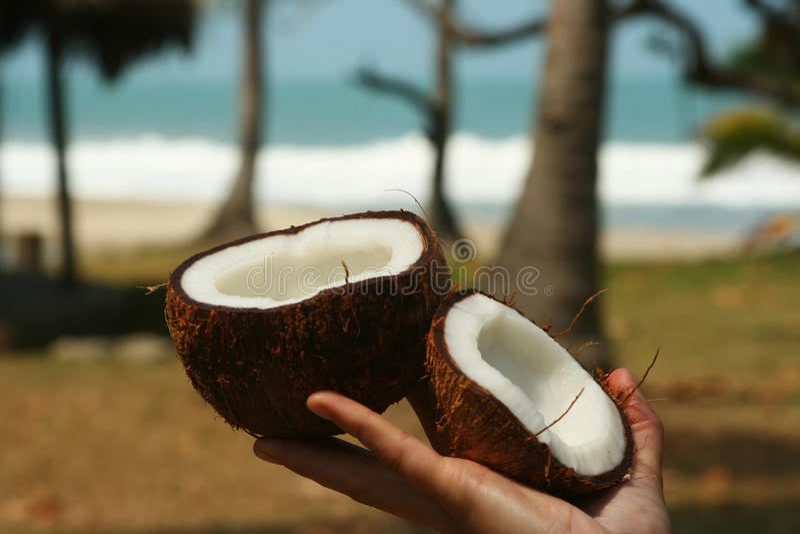 Kokosnoot ter beschikking royalty-vrije stock fotografie