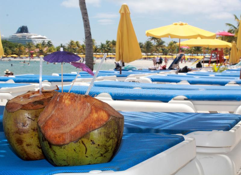 Kokosnoten als strandsamenvatting in Oogst Caye, Belize stock foto