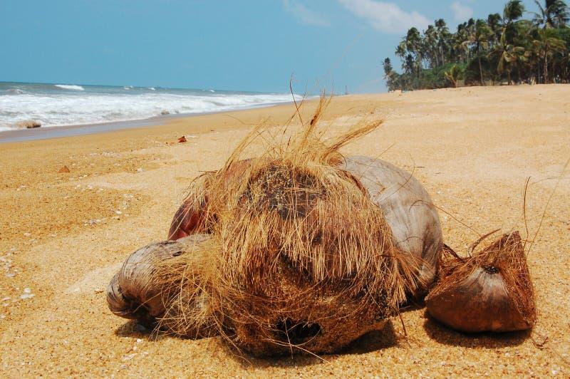 Kokosnoten op het strand