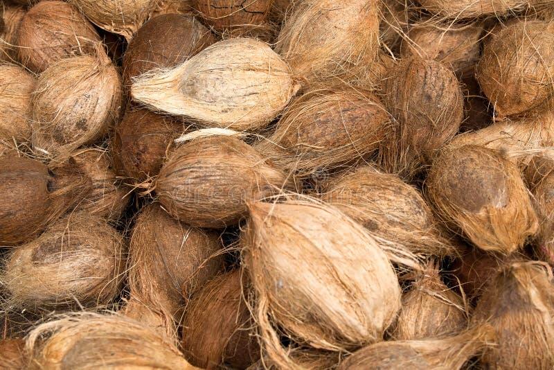 Kokosnotenachtergrond royalty-vrije stock foto's