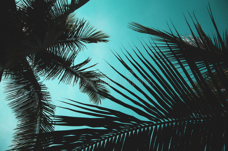 Kokosnotenbladeren stock foto's