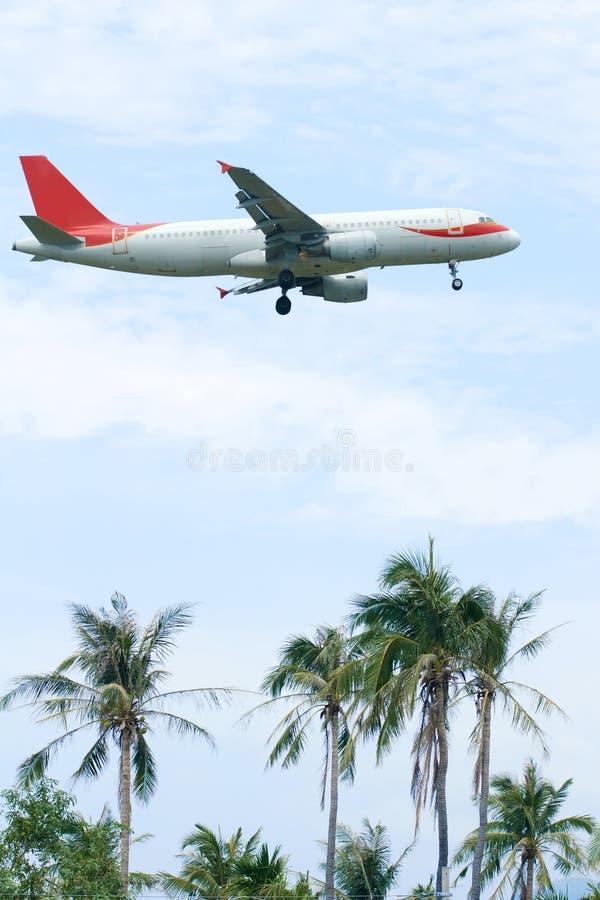 Kokosnotenbosjes en vliegtuig stock afbeeldingen