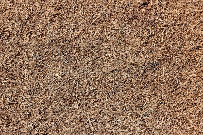 Kokosnotencoir - een vuller voor matrassen stock afbeelding