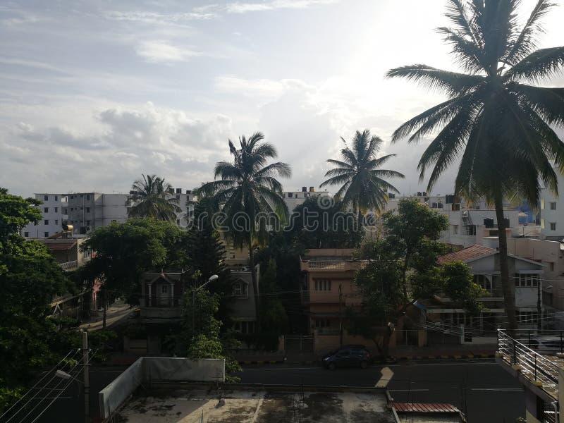 Kokosnotenhaarlok stock foto