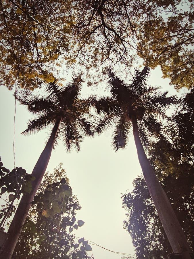 Kokosnotenpaar royalty-vrije stock fotografie
