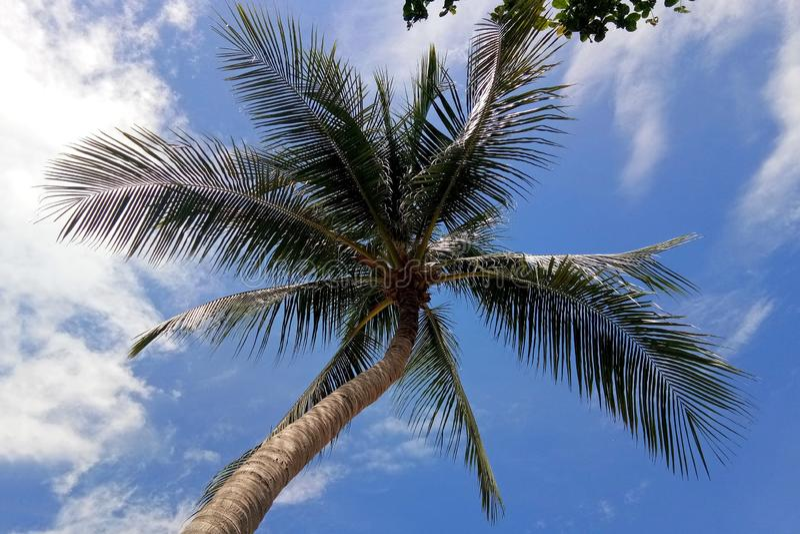 Kokosnotenpalm en Bewolkte Blauwe Hemel royalty-vrije stock foto