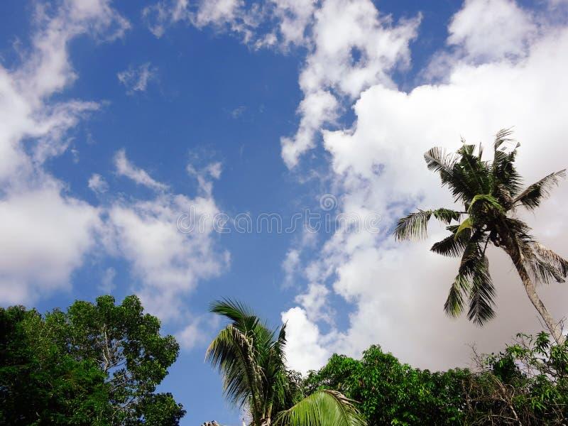 Kokosnotenpalm met blauwe hemel, mooie tropische achtergrond stock afbeelding