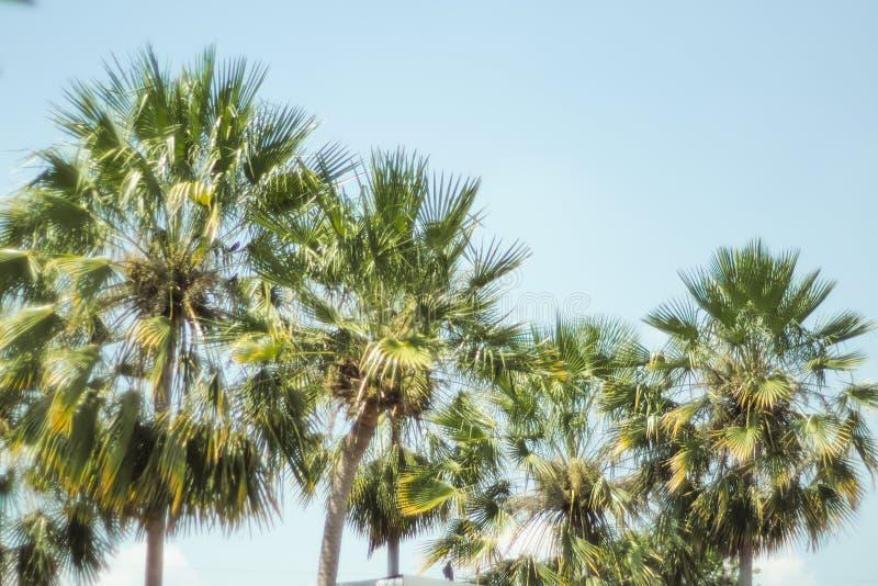 Kokosnotenpalm met blauwe hemel, mooie tropische achtergrond De vakantieachtergrond van de zomer stock foto's