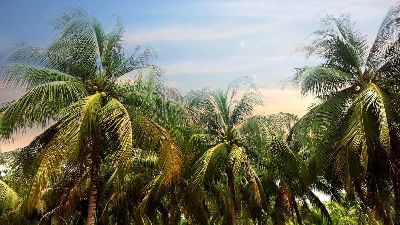 Kokosnotenpalm op de hemelachtergrond in Schemeringtijd stock foto