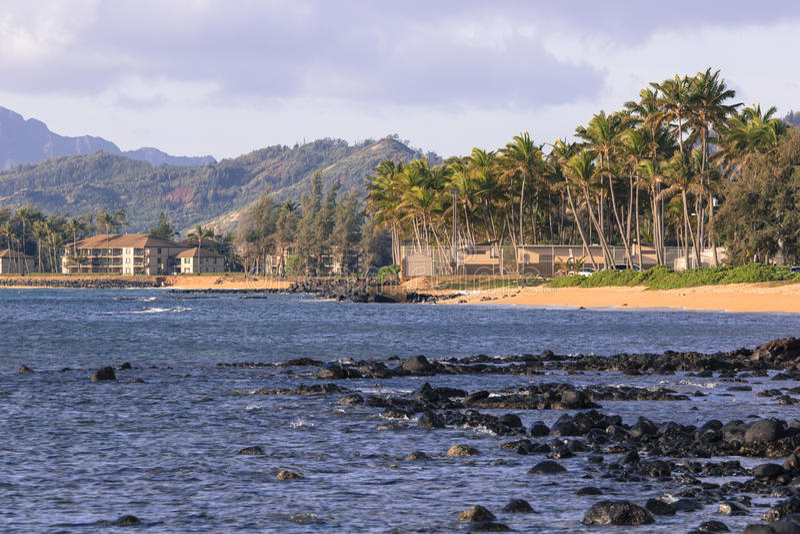 Kokosnotenpalm op het zandige strand in Kapaa Hawaï, Kauai royalty-vrije stock afbeelding