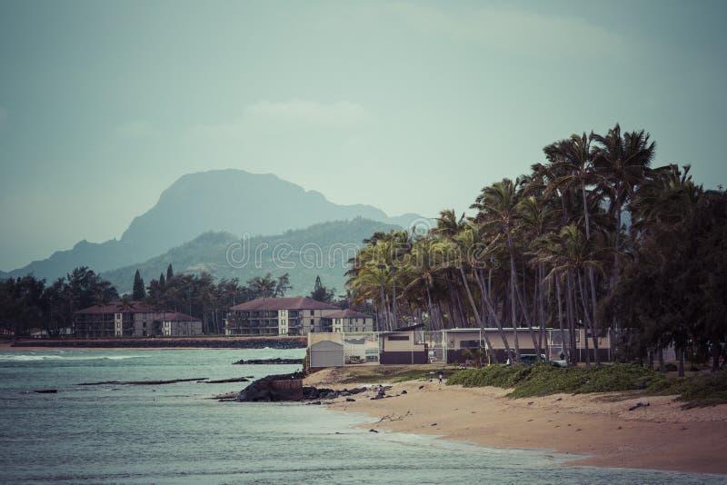 Kokosnotenpalm op het zandige strand in Kapaa Hawaï, Kauai stock fotografie