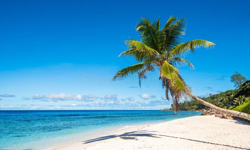 Kokosnotenpalm op tropisch strand, Seychellen stock foto