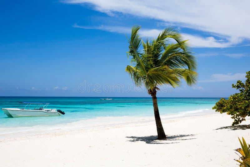 Kokosnotenpalm op wit zandig strand, Dominicaanse Republiek royalty-vrije stock foto
